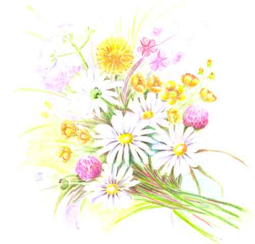 Как нарисовать полевые цветы