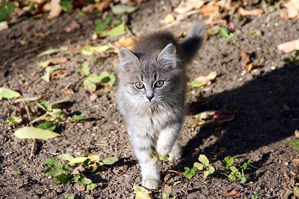 cat.jpg (600x400, 89Kb)