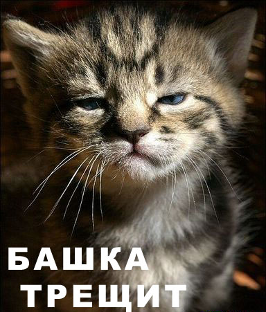 bashka.jpg (384x451, 48Kb)