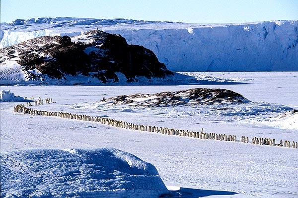 pinguins_09.jpg (600x400, 82Kb)