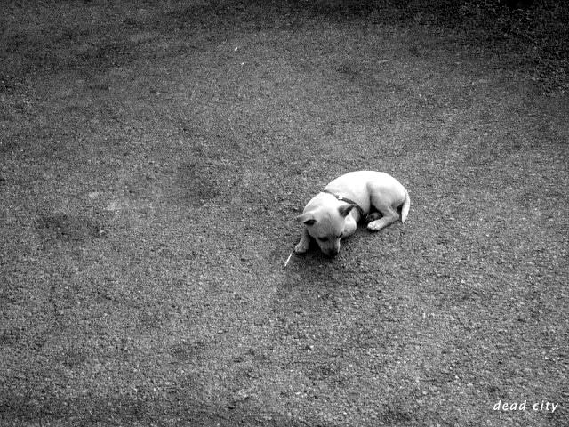 dog_by_Gares.jpg (640x480, 215Kb)