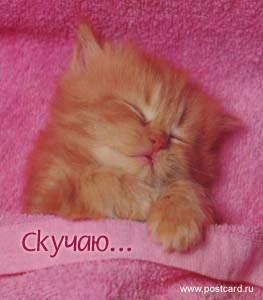 955777377_cat2.JPG (263x300, 10Kb)