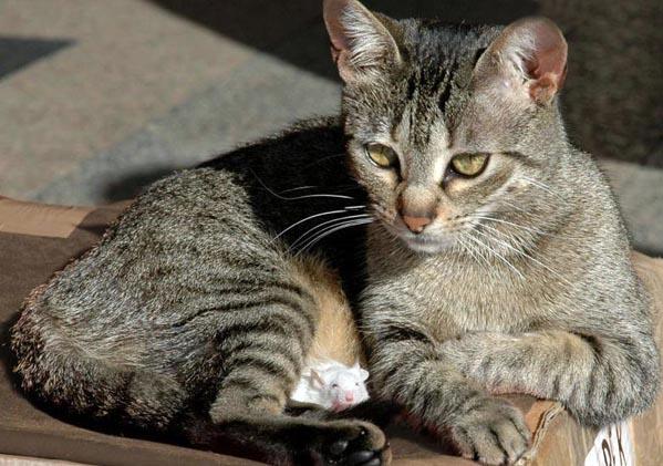 1216_cat55.jpg (599x421, 83Kb)