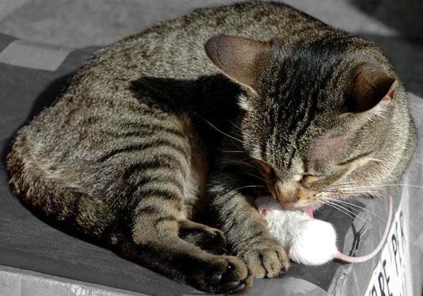 1216_cat56.jpg (599x419, 80Kb)