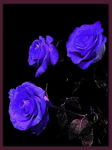sinei rozi.jpg (375x500, 24Kb)