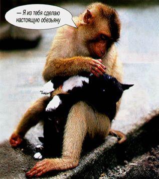 cat&makaka.jpg (317x358, 25Kb)