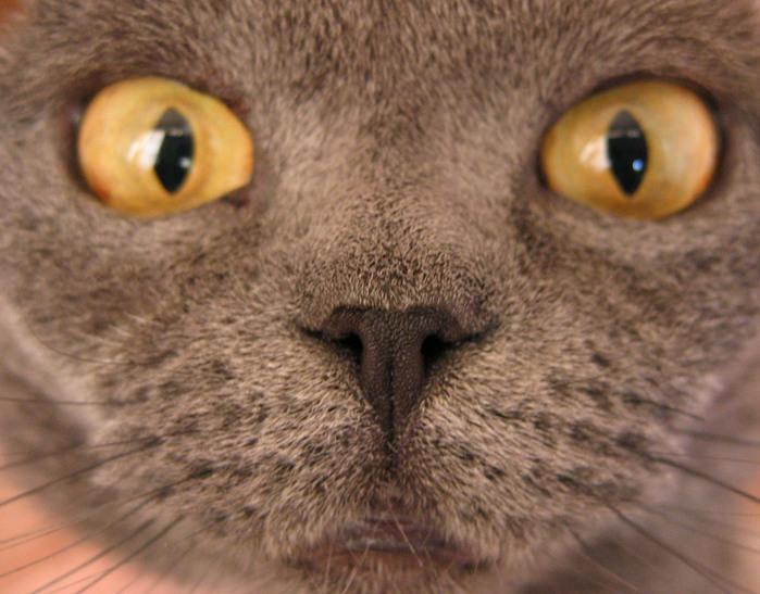 кошка.jpg (699x547, 153Kb)