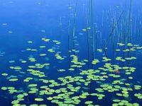 th_Woahink-Lake_-Jessie-Honeyman-State-Park_-Oregon.jpg (200x150, 9Kb)