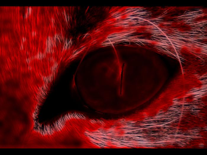 глазища.jpg (700x525, 331Kb)
