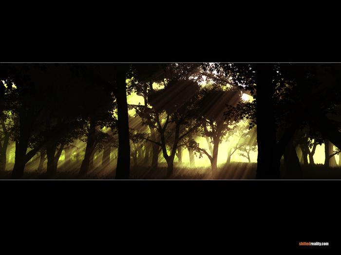 n_calatras_forest.jpg (700x525, 94Kb)