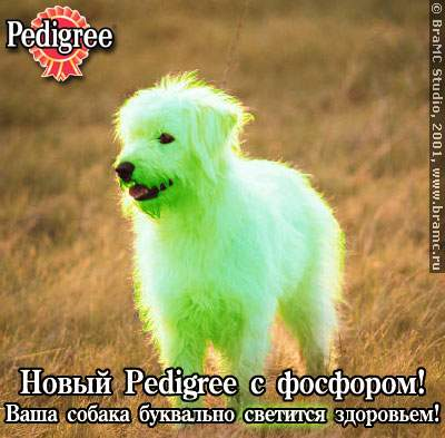 pedigree.jpg (400x393, 27Kb)