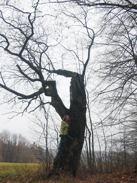 tree.jpg (480x640, 167Kb)
