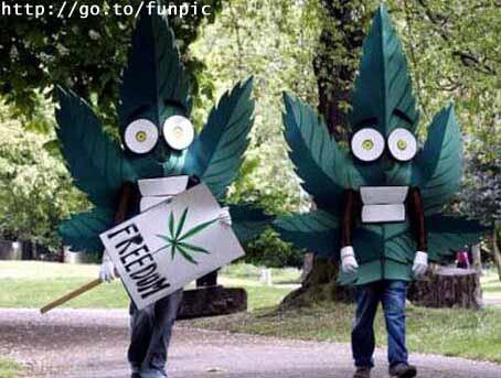 marihuana.jpg (454x343, 27Kb)