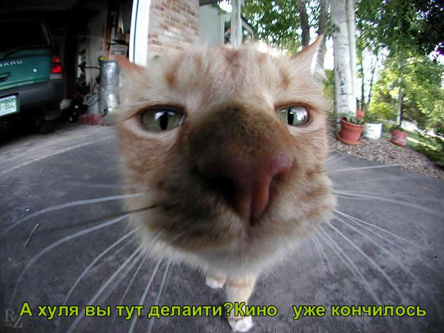 котик3.jpg (640x480, 48Kb)