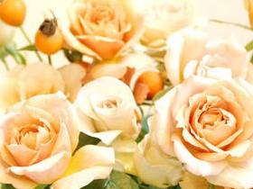 розы с шиповн.JPG (280x210, 20Kb)