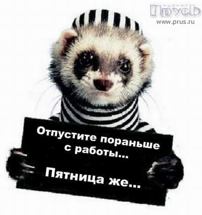 1130072443_patnica_poranse.jpg (400x425, 20Kb)