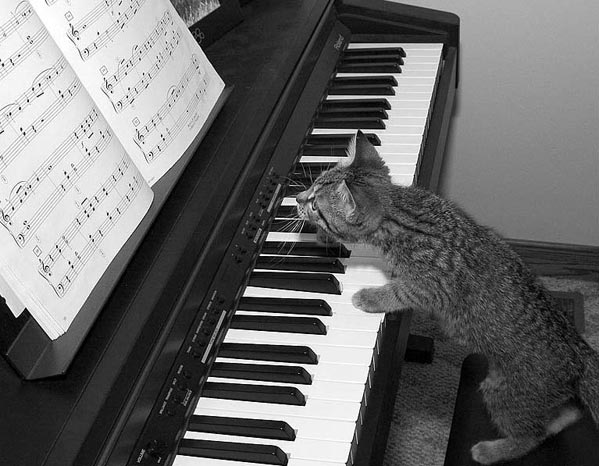 cat_piano.jpg (599x466, 54Kb)
