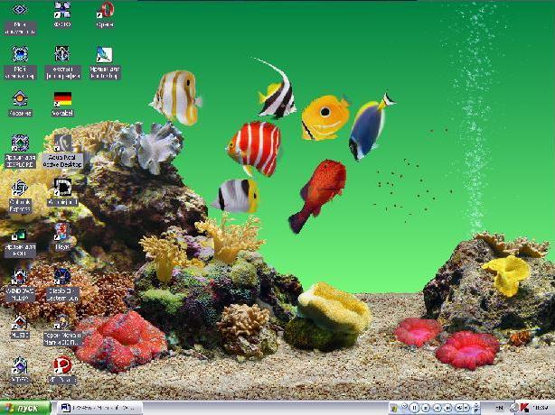 аквариум.JPG (614x460, 75Kb)