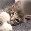 nezhnyj cat.jpg (110x110, 5Kb)