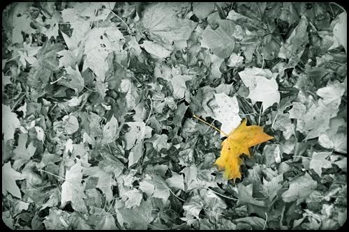 IMG_7380_leaf.jpg (500x333, 203Kb)
