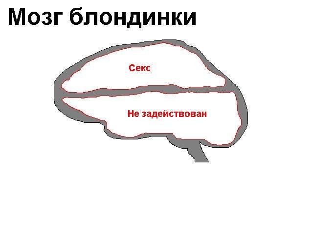 http://img.liveinternet.ru/images/attach/1/3482/3482583_Mozg_blondinki.jpg