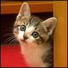 kitten169i.jpg (100x100, 5Kb)