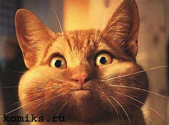 cat01.jpg (350x259, 16Kb)