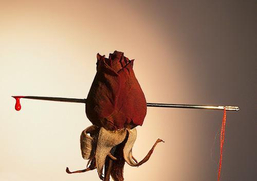 roseheart.JPG (500x353, 15Kb)