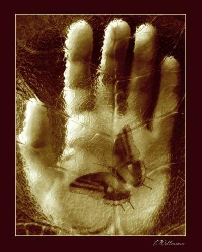 hand.JPG (399x496, 32Kb)