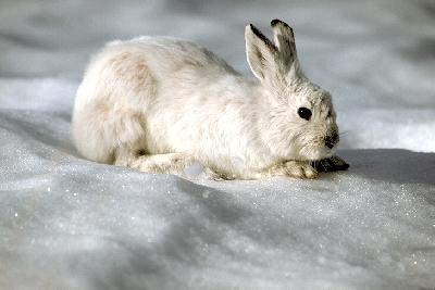 кролик.jpg (400x267, 89Kb)