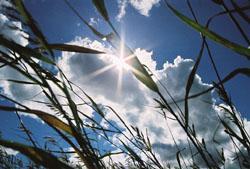 grass.JPG (250x169, 12Kb)