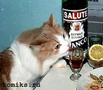 cat12.jpg (350x306, 17Kb)