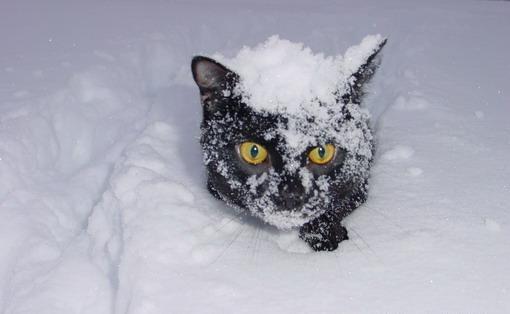 snegokot.jpg (510x314, 16Kb)