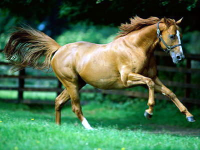 wanna run like wild horse__.jpg (400x300, 26Kb)