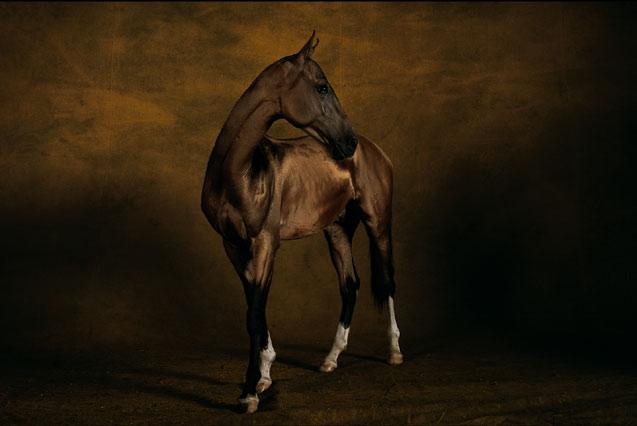 конь.jpg (637x426, 32Kb)