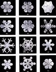 180px-SnowflakesWilsonBentley.jpg (180x230, 17Kb)