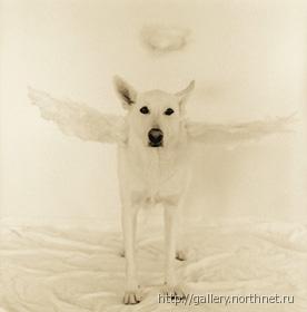 http://www.liveinternet.ru/images/attach/1/3941/3941512_angelsobaka.jpg