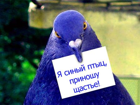 Синий голубь.jpg (450x338, 67Kb)