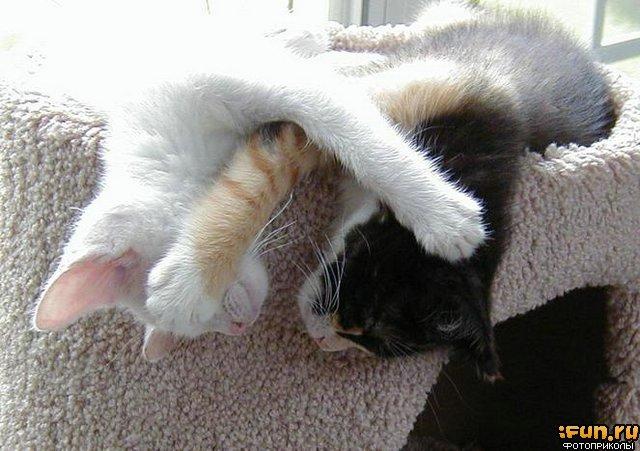 котятта спят.jpg (640x451, 65Kb)