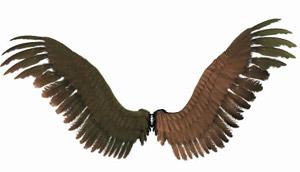 wings2.jpg (300x172, 11Kb)