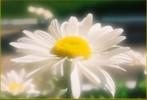 romashka.jpg (147x100, 5Kb)