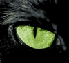 cat3.jpg (100x92, 7Kb)