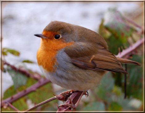 фото: маленький Птах фотограф: Andrei Marchanka.