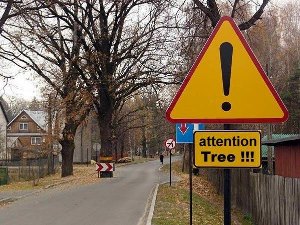 tree.jpg (599x449, 84Kb)