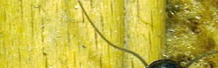DSC058431.jpg (319x100, 25Kb)