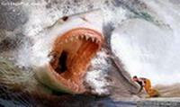 акула.jpg (200x119, 9Kb)