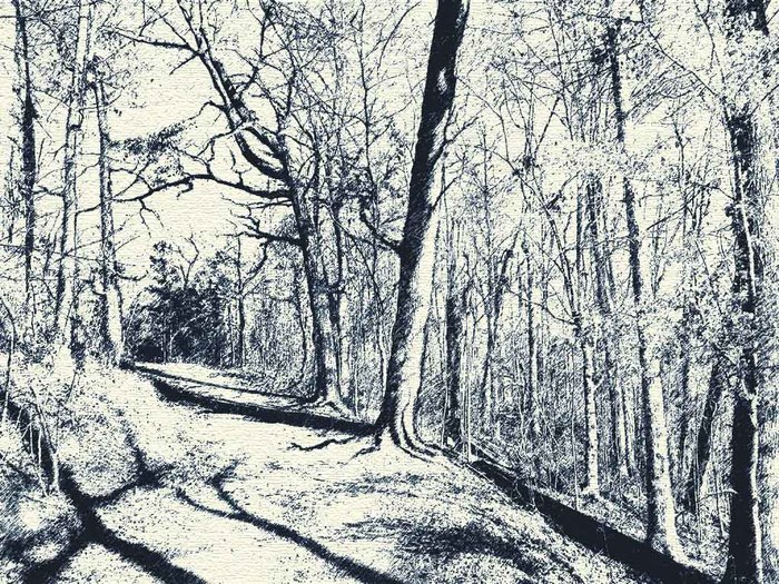 Лес Скива.jpg (700x525, 227Kb)