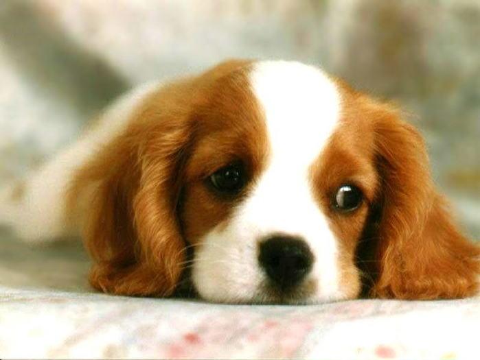 Dog.jpg (699x525, 38Kb)
