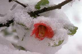 flower_snow.jpg (288x190, 7Kb)