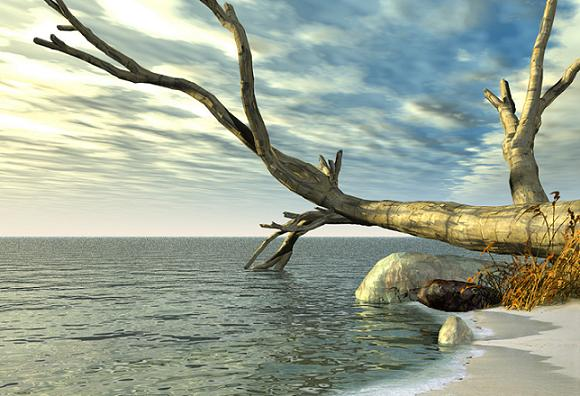 dead tree.JPG (580x396, 46Kb)